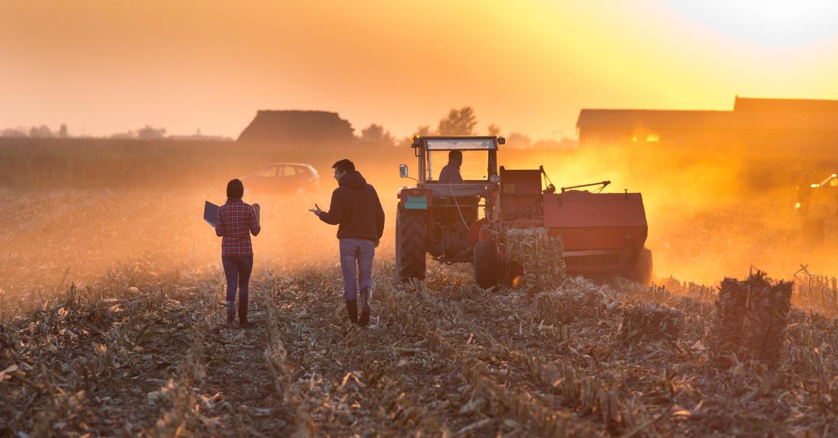 Gestão familiar: o dilema dos herdeiros no campo