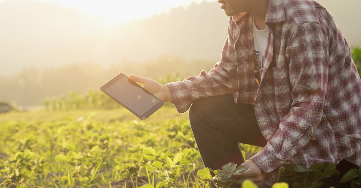 Por que tantas empresas do agronegócio estão apostando no uso do Big Data?