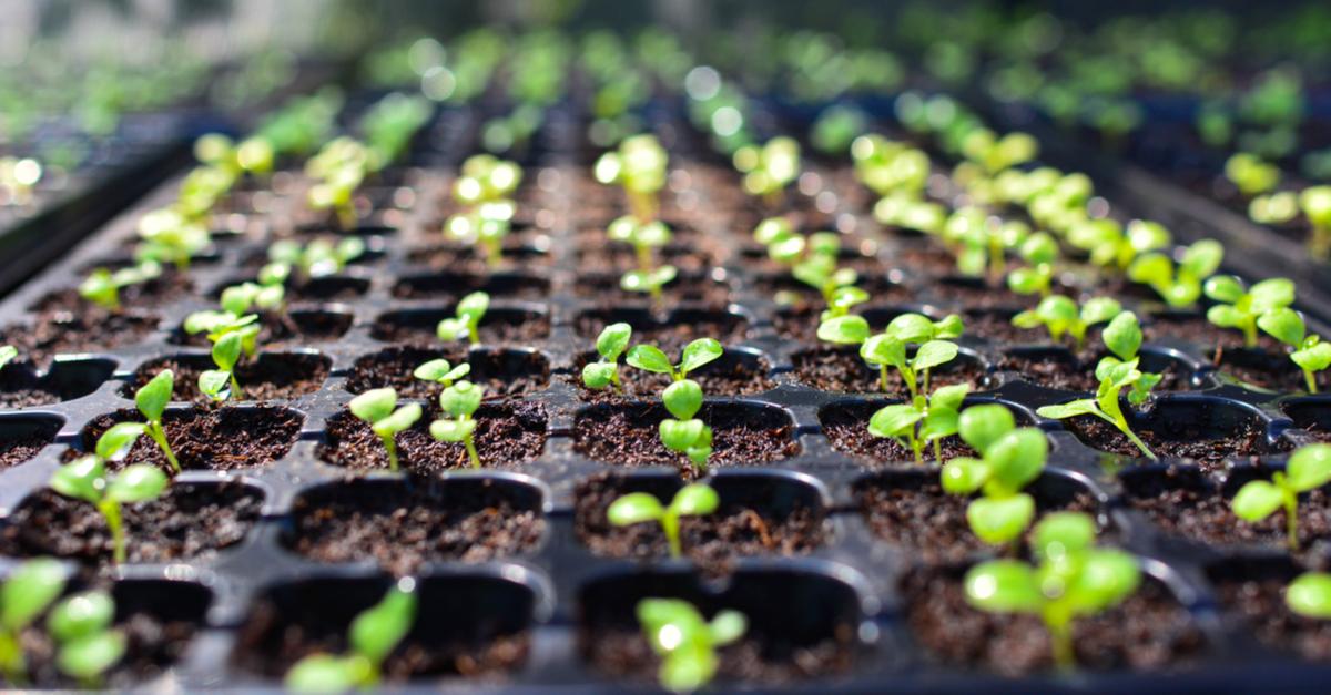sistematização agricola